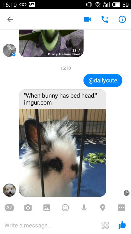 Send a photo of a random cute animal