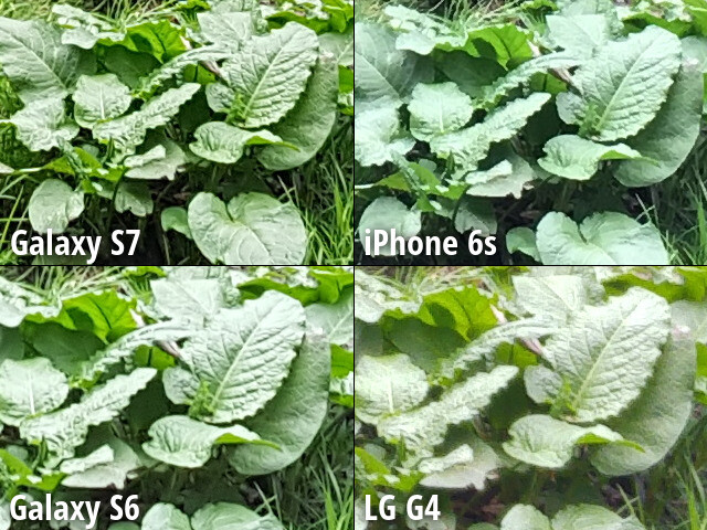 100% zoom - Crops and high-res images - Best smartphone cameras compared: Samsung Galaxy S7 vs iPhone 6s, Galaxy S6, LG G4