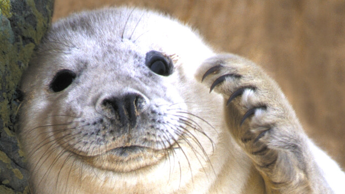 Wildlife administration warns: don't take selfies with seal pups!