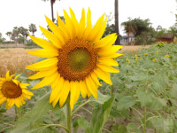 10-great-images-captured-with-smartphones-13103