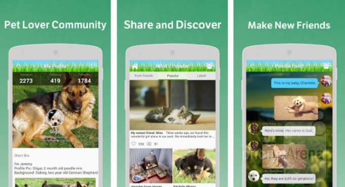 Pets Amino is an awesome society of pet owners sharing photos and advice of their favorite animals