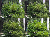 crop1-labeled.jpg
