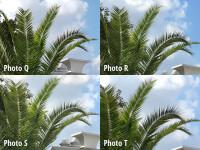 crop8-labeled.jpg