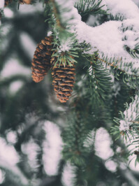 wintry-smartphone-wallpapers-02