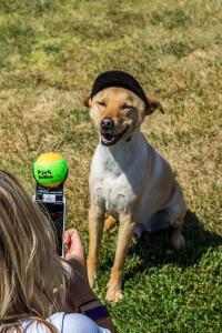 pooch-selfiesgrande