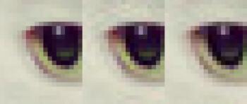A crop of a cat's eye. From left to right – original, libjpeg, Guetzli