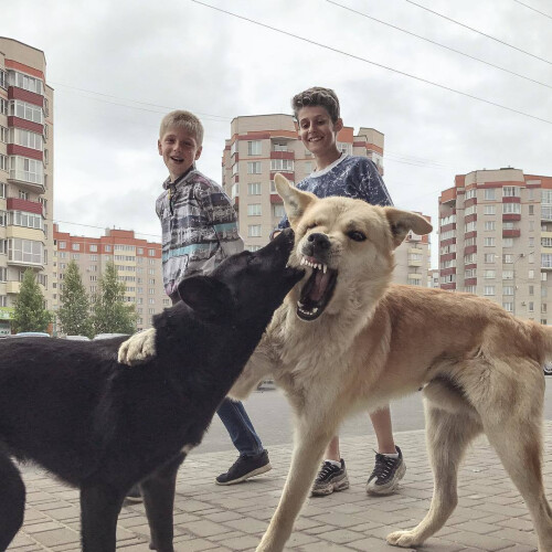 This Russian's collusion with an iPhone 7 proves that the best camera is the one you carry