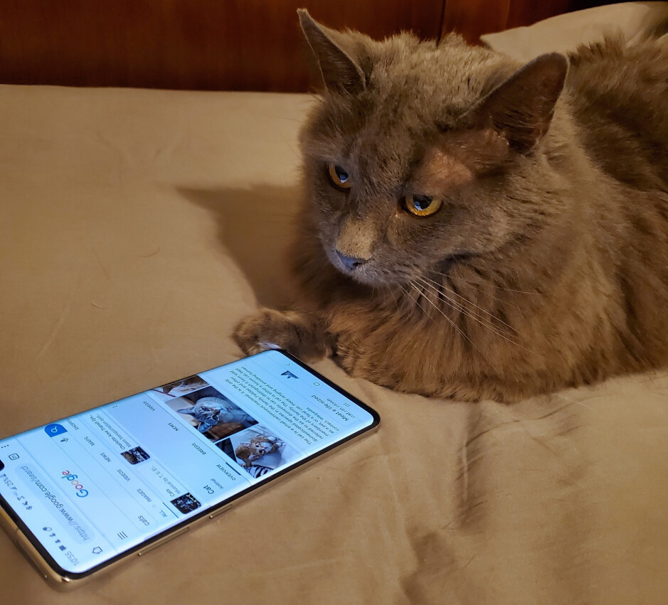 Maybe the cat was behind it all along! - Creepy examples of ad targeting: are smartphones eavesdropping on us?