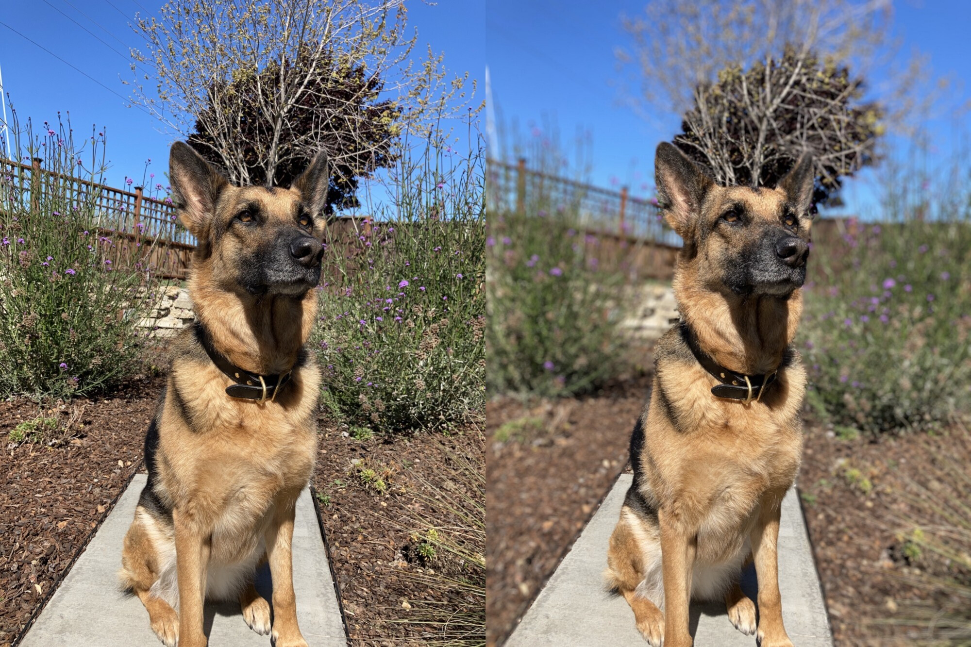 The SE uses machine learning to detect human subjects with great results, but the same can't be said for non-human subjects, so Apple disabled that option in its camera app. - Developer tests 2020 iPhone SE camera, results show impressive photography for a single-camera setup