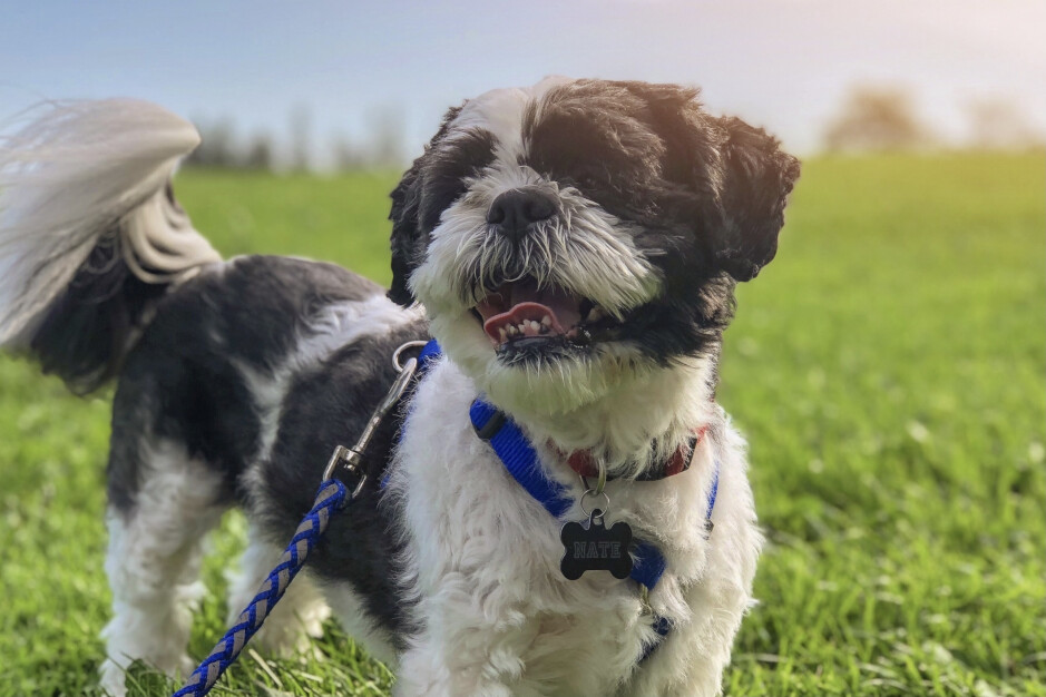 Can you use AirTags to track people and pets?