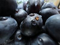 AppleiPhone-13-ProBlueberries09142021