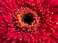 AppleiPhone-13-ProRed-Flower09142021