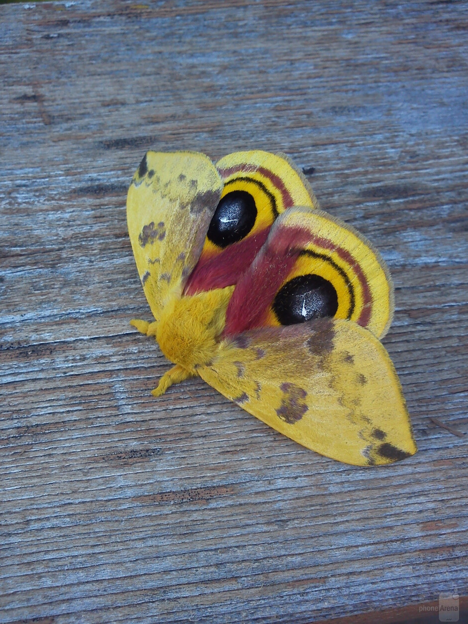 2. Andrew Petrie - Sony Ericsson Xperia PLAYMoth - Cool images, taken with your cell phone #12