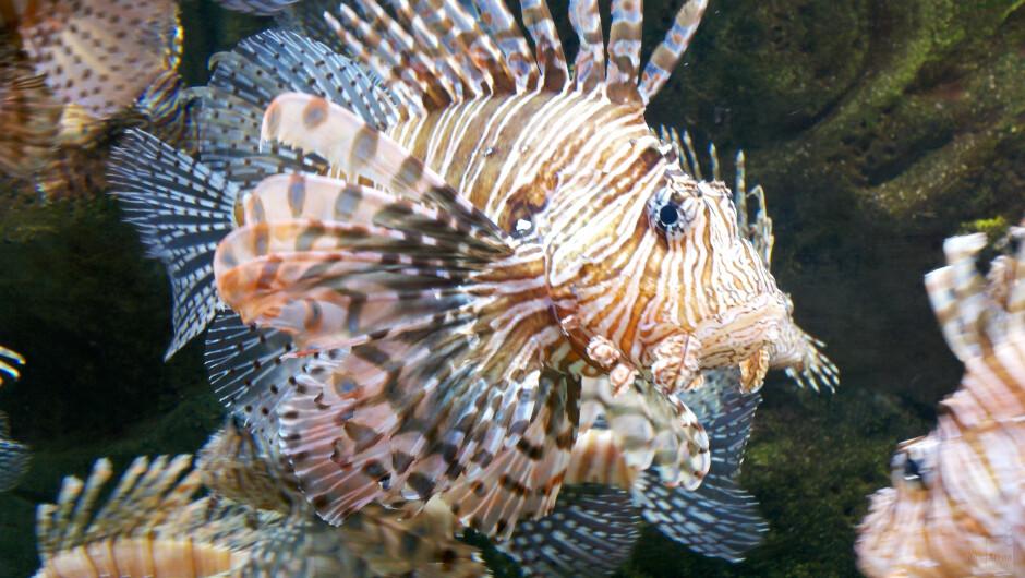 8. Jarrad Reynolds - Motorola DROID XAtlanta Aquarium - Cool images, taken with your cell phone #14