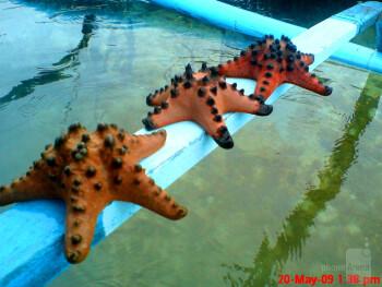 13. Ryan Manalo - Sony Ericsson k810iguimaras starfish