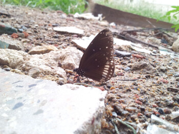 11. Srikanth - Samsung Galaxy S IIButterfly taking a day off