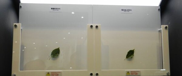 Anti Reflective Picture Glass