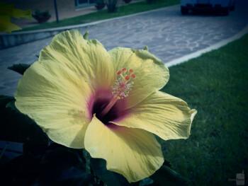 2. Davide Brutti - Samsung Galaxy SSpring flower