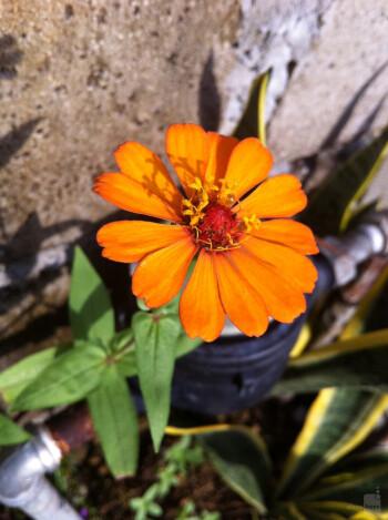 6. Loues Madlang-awa - Apple Iphone 4Forbidden Flower
