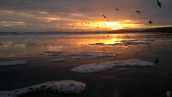 8. Vlado - Nokia N8Californian beach