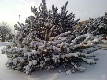 15. Victor Bonhart - Nokia N97 MiniSnow on Pine Bush