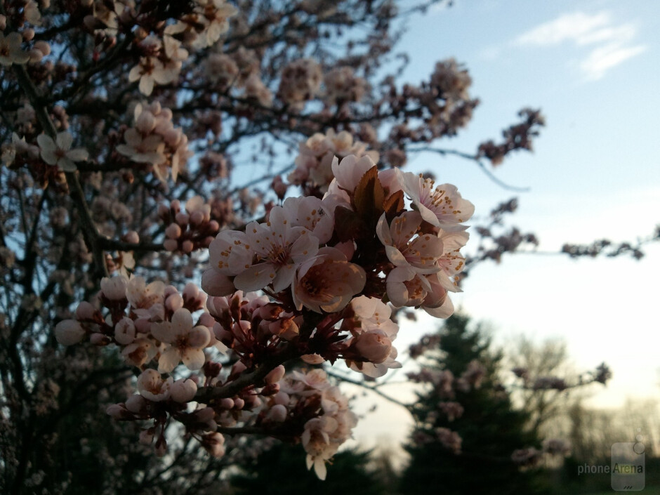 12. nwright94 - Samsung FocusPlum blossoms at sunset - Cool images, taken with your cell phone #38