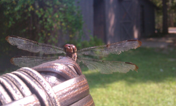 7. Hunter Bracy - HTC MergeUp close to a dragon fly
