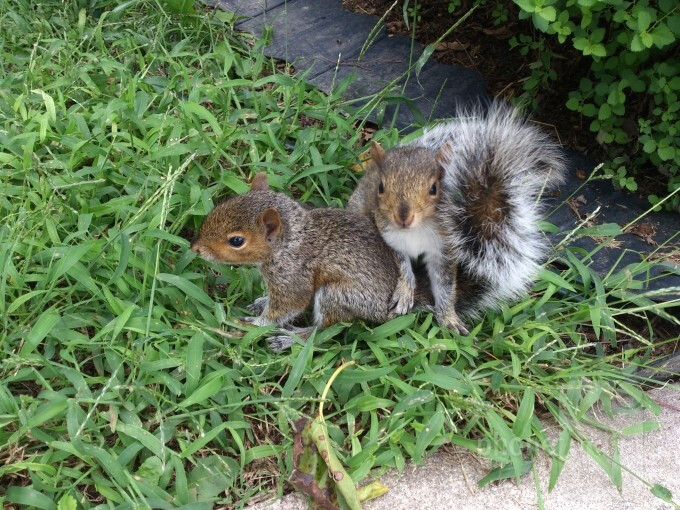 William Likens - Sony Xperia ionOur playful baby squirrels(Last time's winner) - Cool images, taken with your cell phone #54