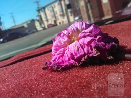 Armand Beltran - Nokia Lumia 900 - The Wilting Flower