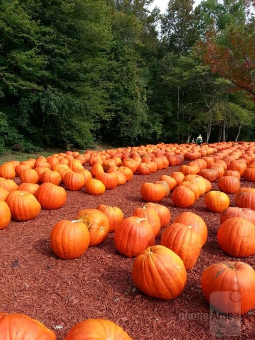 Josh Auton - Samsung Galaxy S III<br>Burt's pumpkin farm, Dawsonville Ga