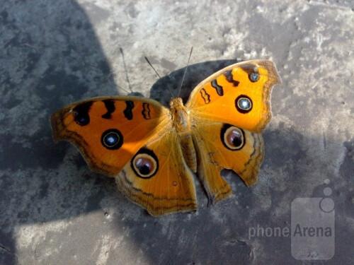 Rahul Rajan - Nokia N73Eight eyes