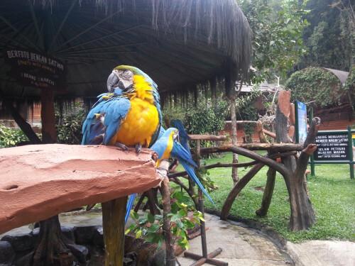 nexis - Samsung Galaxy S IIIBirds in Safari Garden, Indonesia