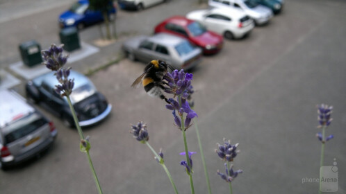 blaer - Nokia N8<br>Bumblebee having lunch on our balcony