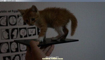 Alleged first photo of the Sony Xperia ZU aka Togari phablet leaks, kitten in tow