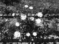 01-ios7-camera-filter-noir.JPG
