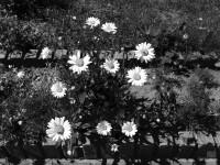 04-ios7-camera-filter-tonal.JPG