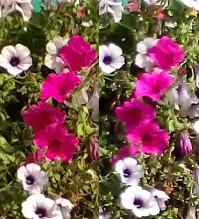 flowerscomp