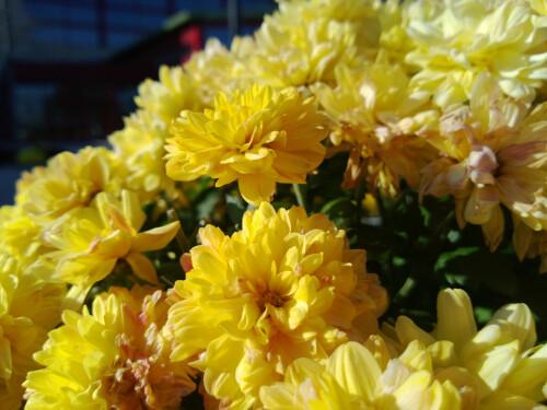 Sample images taken with the Nokia Lumia 920