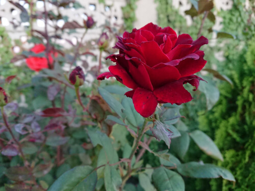 Sony Xperia XZ1 Compact sample images