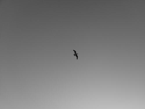 Black & White photos with Nokia 8