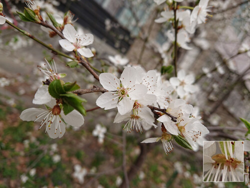 Sony Xperia XZ2 sample images