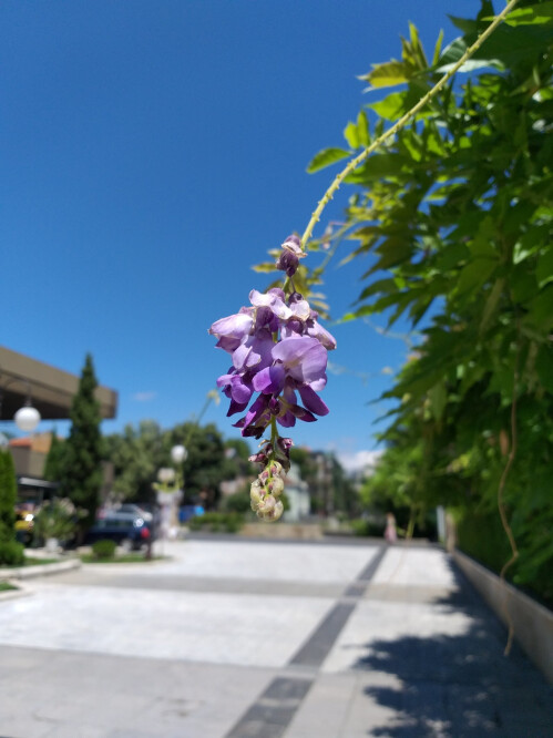 Samsung Galaxy A6+ sample images