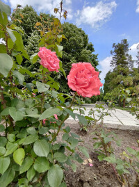 Asus-Zenfone-6-Review002-02-wide-angle-samples