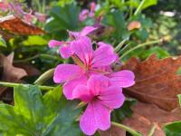 iPhone-flower.jpg