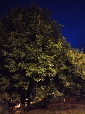 010-A-pro-012-no-night-mode-note9-pro.jpg