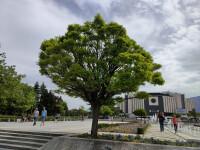 ZTE-Axon-Ultra-30-Review006-Tree-Axon-30-main-samples