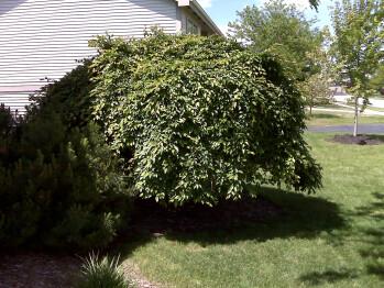 Outdoor images - RIM BlackBerry Curve 8330 Review