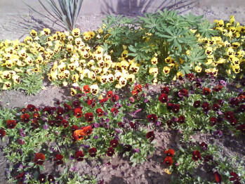 Outdoor photos shot with Sony Ericsson W395 - Sony Ericsson W395 Review