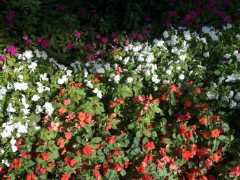 Outdoor photos taken with Nokia N900 - Nokia N900 Preview