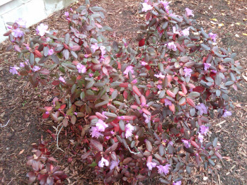 Outdoor camera samples made with the RIM BlackBerry Storm2 9550 - RIM BlackBerry Storm2 9550 Review